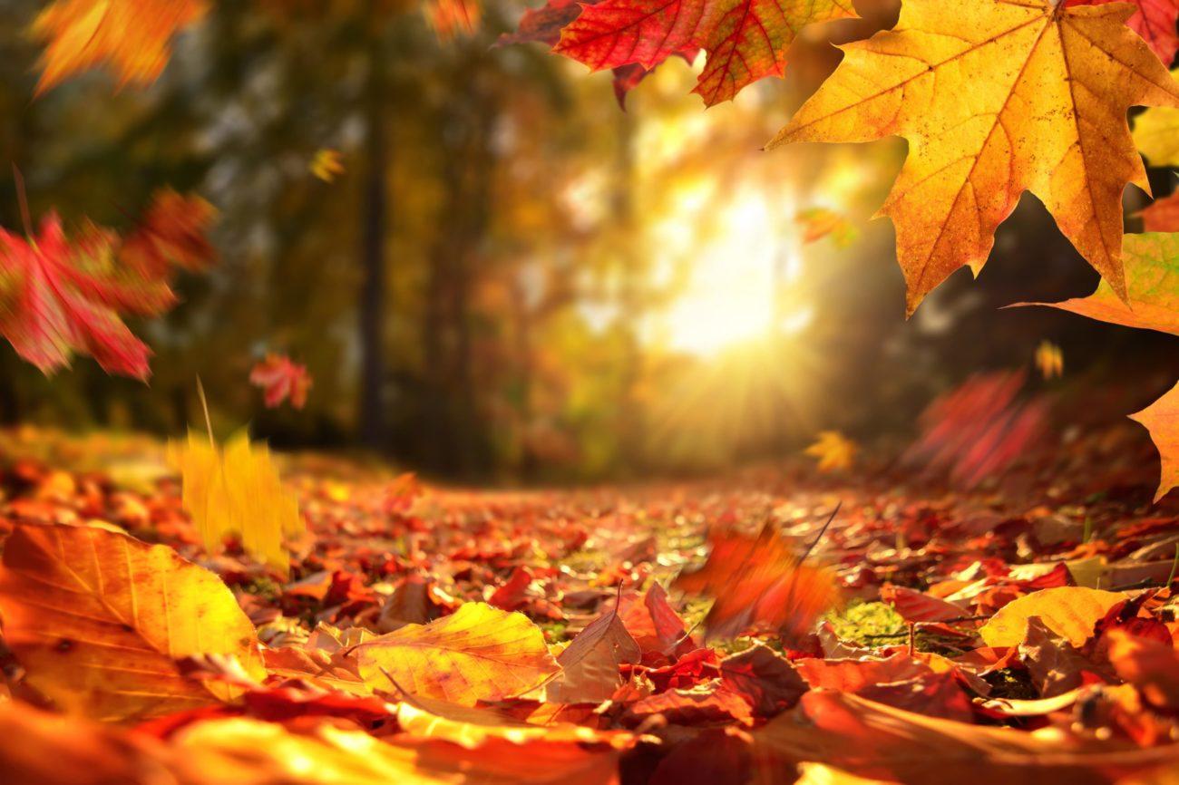 秋分の日は、冬に向けて夜が長くなり始める境目