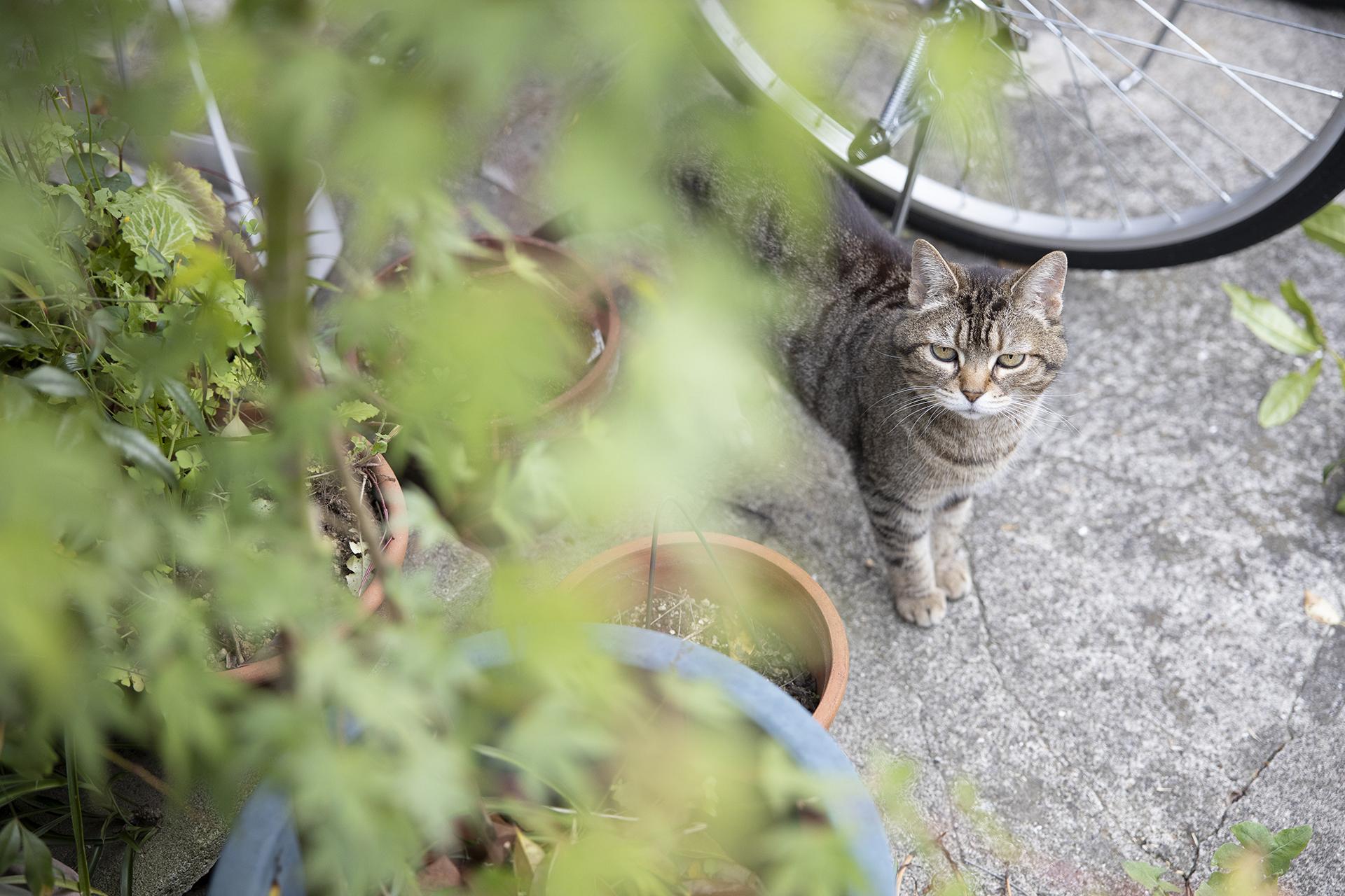 顔見知りの猫