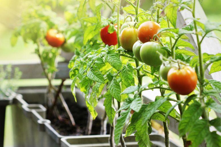 プランター菜園の魅力