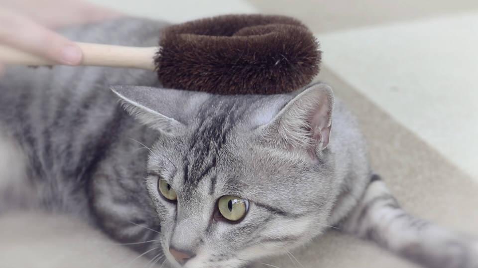 ブラッシングは猫とのスキンシップの時間