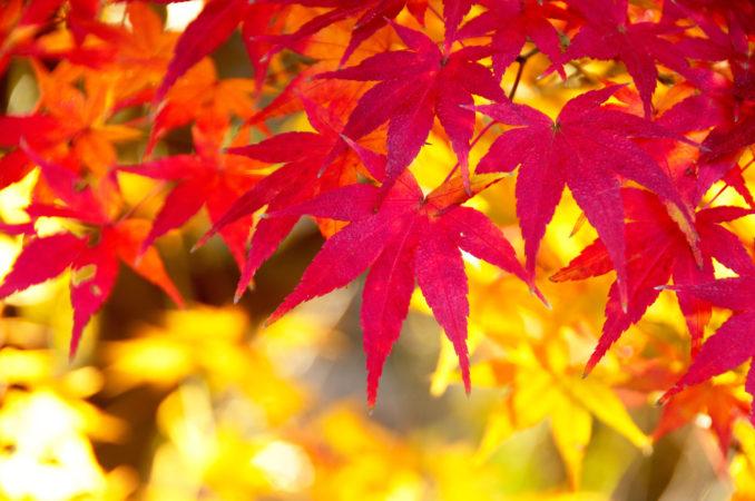 秋を探しに出かけよう。ご近所で見つける美しい景色