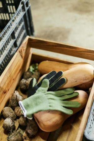 自宅でできる家庭菜園やガーデニング