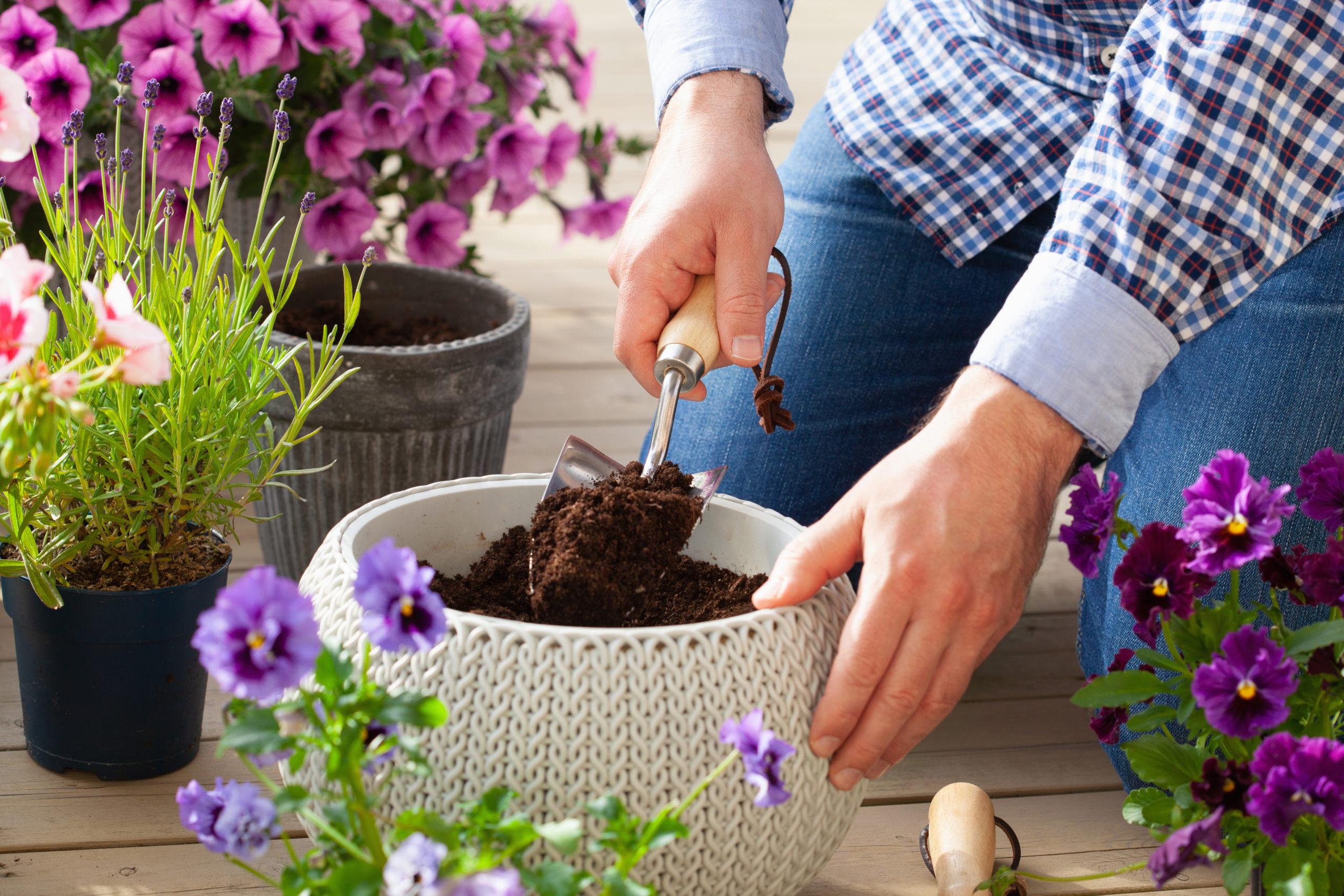 鉢植えガーデニング