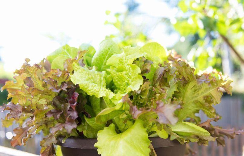 料理に取り入れやすい野菜