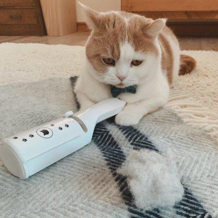 猫の抜け毛の主な原因は、春と秋に起こる換毛期