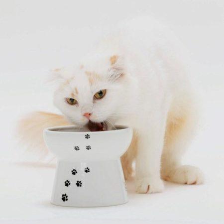 猫の食器選び