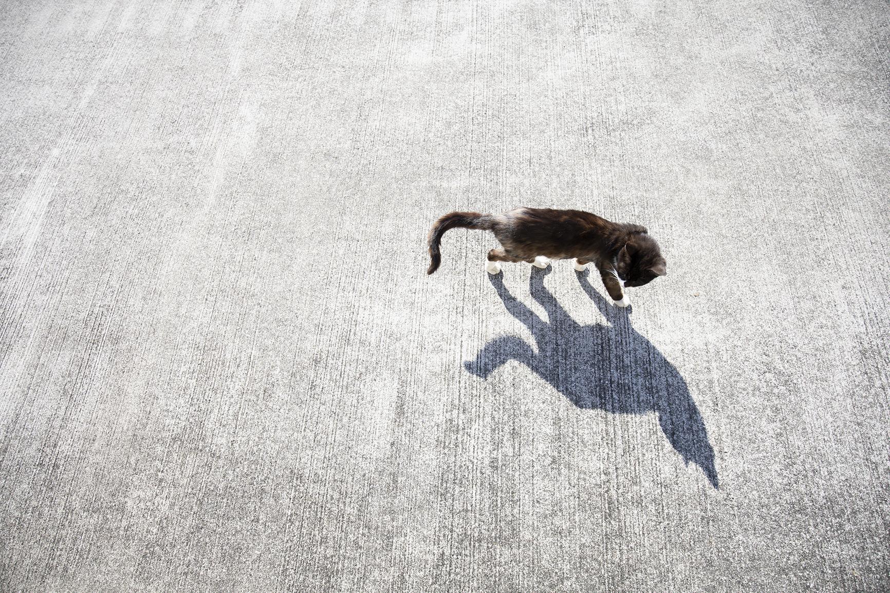一緒に歩いてくれる猫