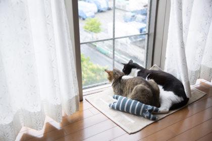 窓の外の鳩を見ている2匹の猫