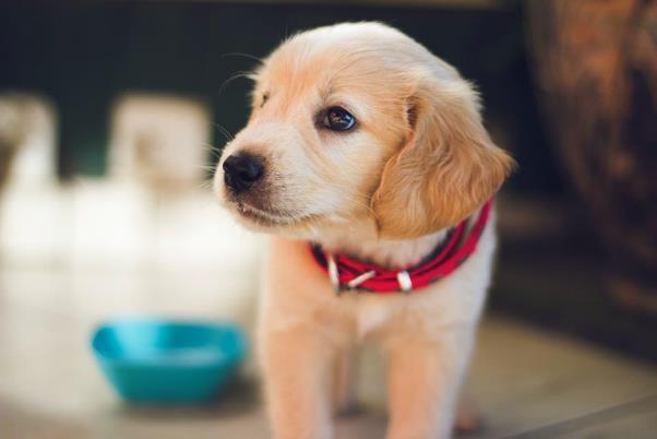 犬の皮膚は角質層が人間の13から15と薄い