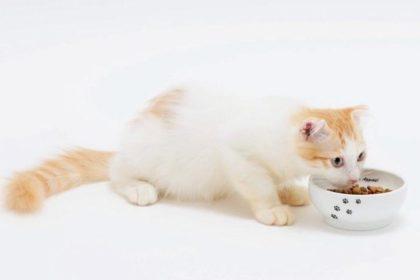 ストレスフリーな猫の食器