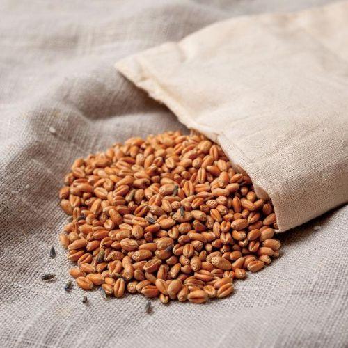 麦を使った温熱療法