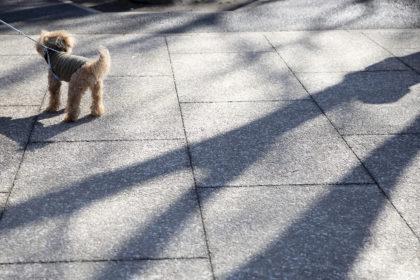 お散歩中のわんちゃん