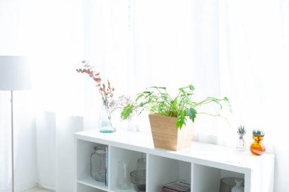 映える観葉植物の飾り方