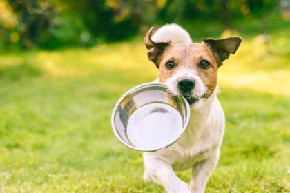 愛犬の食欲に不安を抱く前に試したいこと