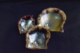 おうちで旅気分!真珠取り出し体験キットで発見と驚きを