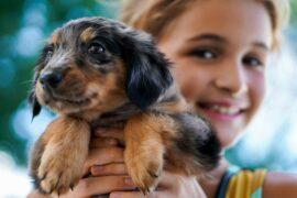 犬や猫はペットショップ以外でも迎えられる!代表的な方法を3つご紹介