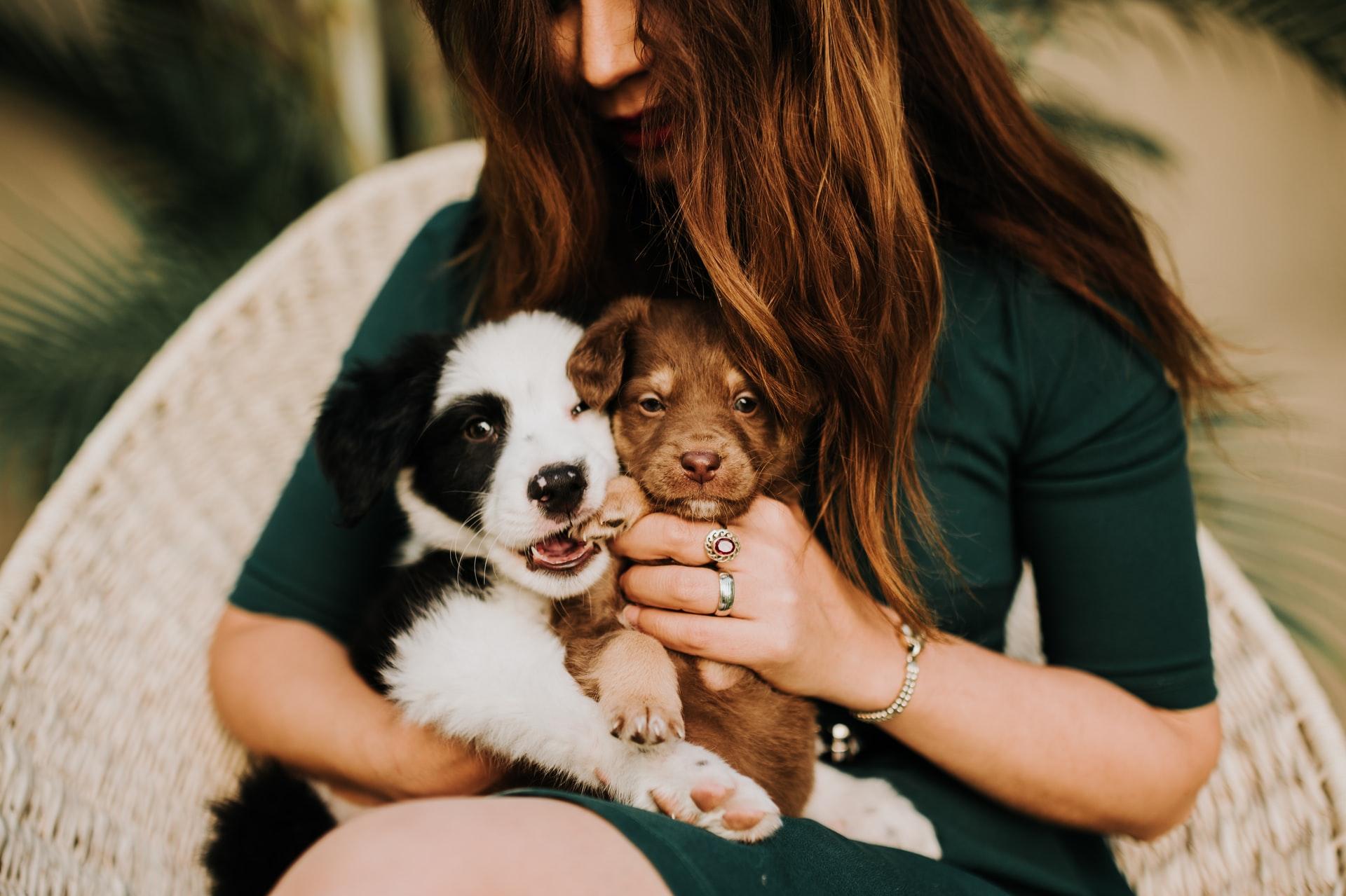 犬や猫をペットショップ以外で迎える方法その3.ブリーダーから直接お迎えする。愛のあるブリーダーを探してみよう