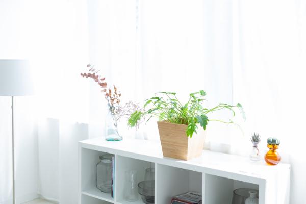 インテリアに観葉植物を取り入れて、室内をリフレッシュできる空間に