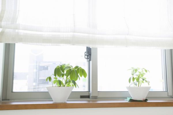 室内で観葉植物を育てる際の注意点
