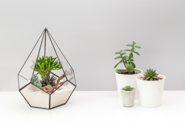卓上のインテリアにおすすめのおしゃれなミニ観葉植物