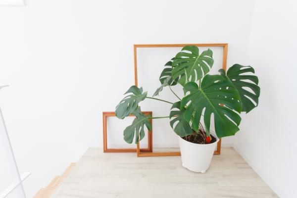 室内のインテリアになじむおすすめの観葉植物