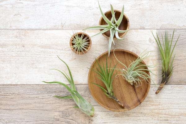 お手入れも簡単な観葉植物が人気