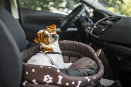 ペットと一緒にドライブ